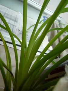 grass_forest